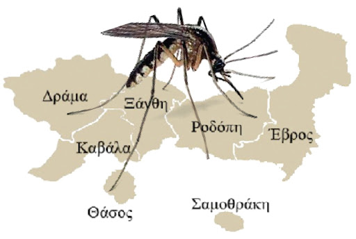 κουνούπια αμθ