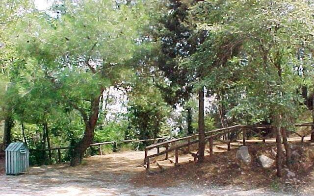 περιαστικό δάσος