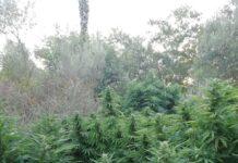Εντοπισμός φυτείας - Μυλοπόταμος