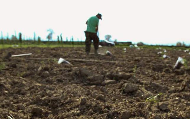 εργάτης γης