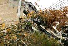 κομμένο δέντρο από την κακοκαιρία στη Θεσσαλονίκη