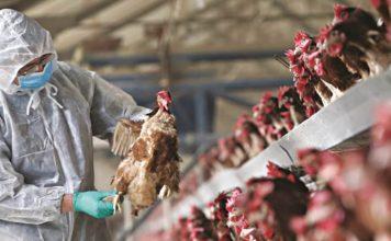 Γρίπη πτηνών