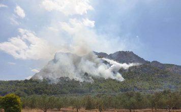 καμένες εκτάσεις στο δήμο Κορινθίων