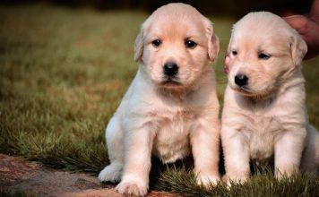 νέο νομοσχέδιο προστασίας ζώων