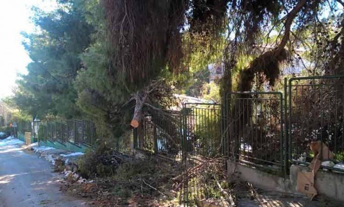 Πεντέλη δέντρα πεσμένα από κακοκαιρία