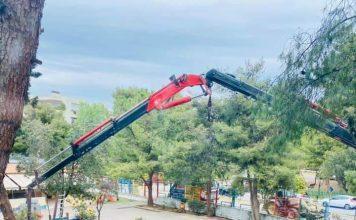 Κοπή δέντρων σε προαύλιο χώρο νηπιαγωγείου στο Δήμο Αμαρουσίου