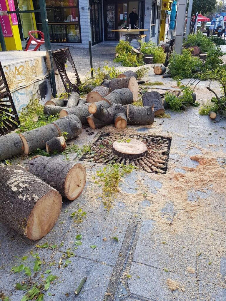 Παράνομη κοπή δέντρων στο Δήμο Αμαρουσίου
