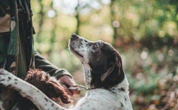 αντιδράσεις κυνηγών για το νομοσχέδιο ζώων συντροφιάς